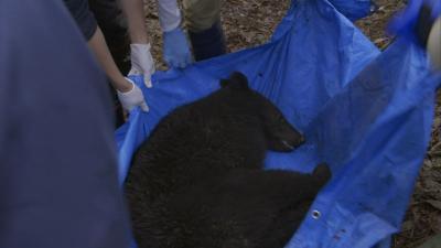 エリア・レポート 「クマと生きる」